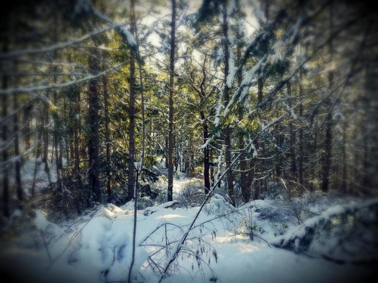 forest target